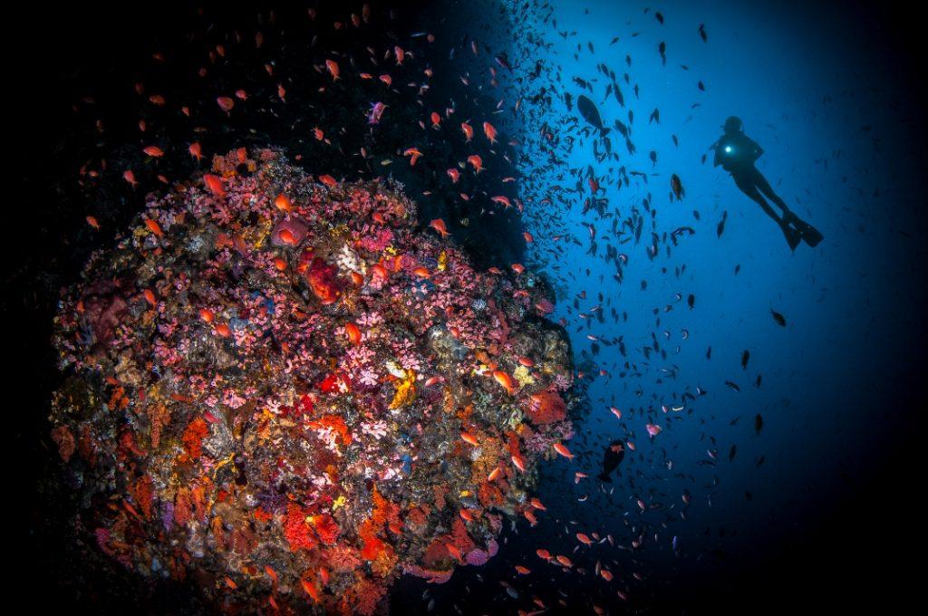 corals-pinneng