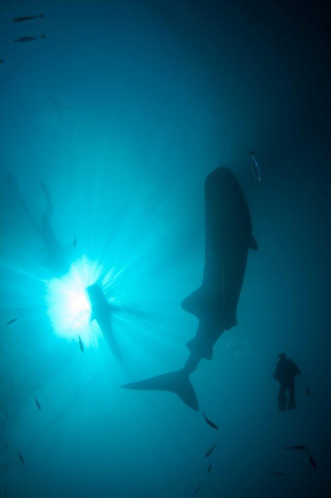 shark-wet-traveler